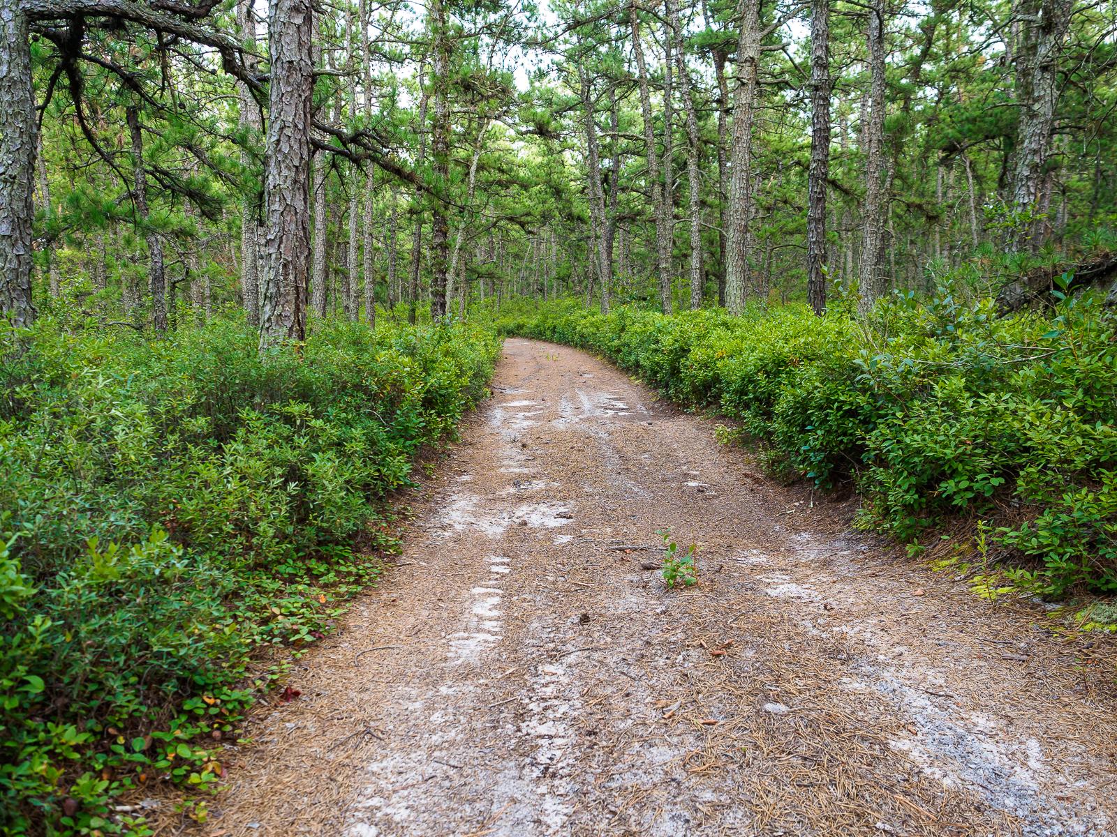 pinelands-9020019