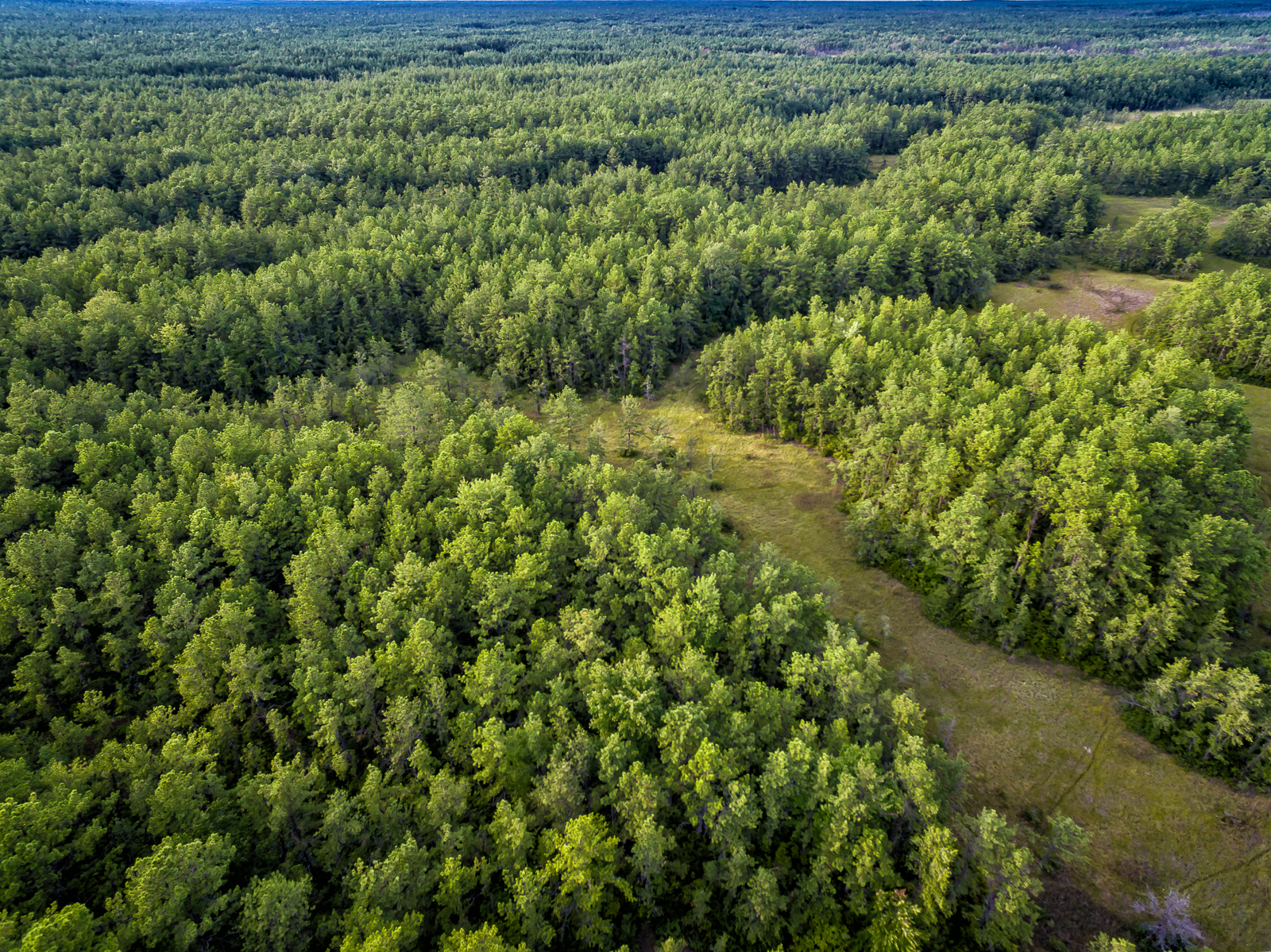 pinelands-savanna-