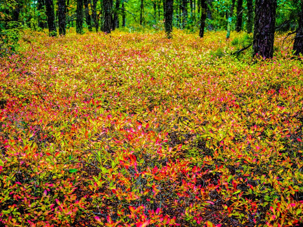 pinelands-color-020026