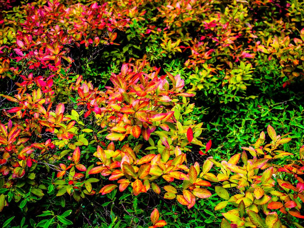 pinelands-color-020028
