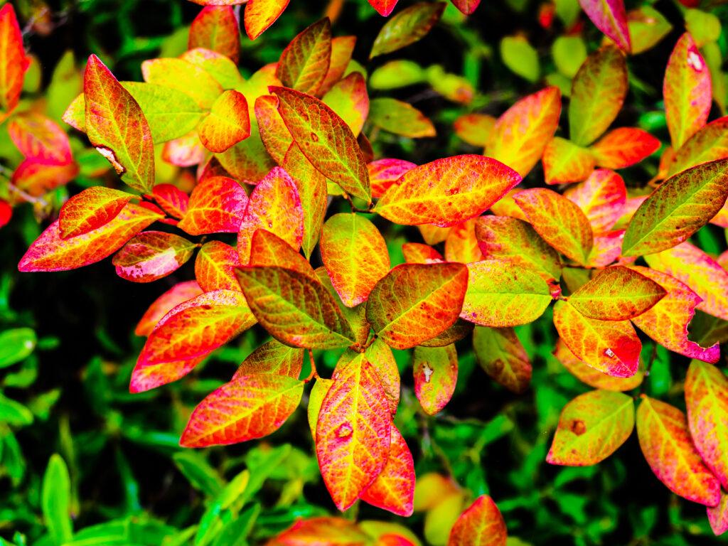 pinelands-color-020029
