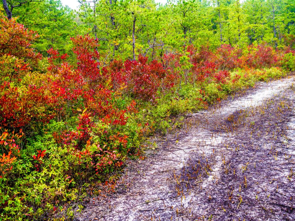 pinelands-color-020032