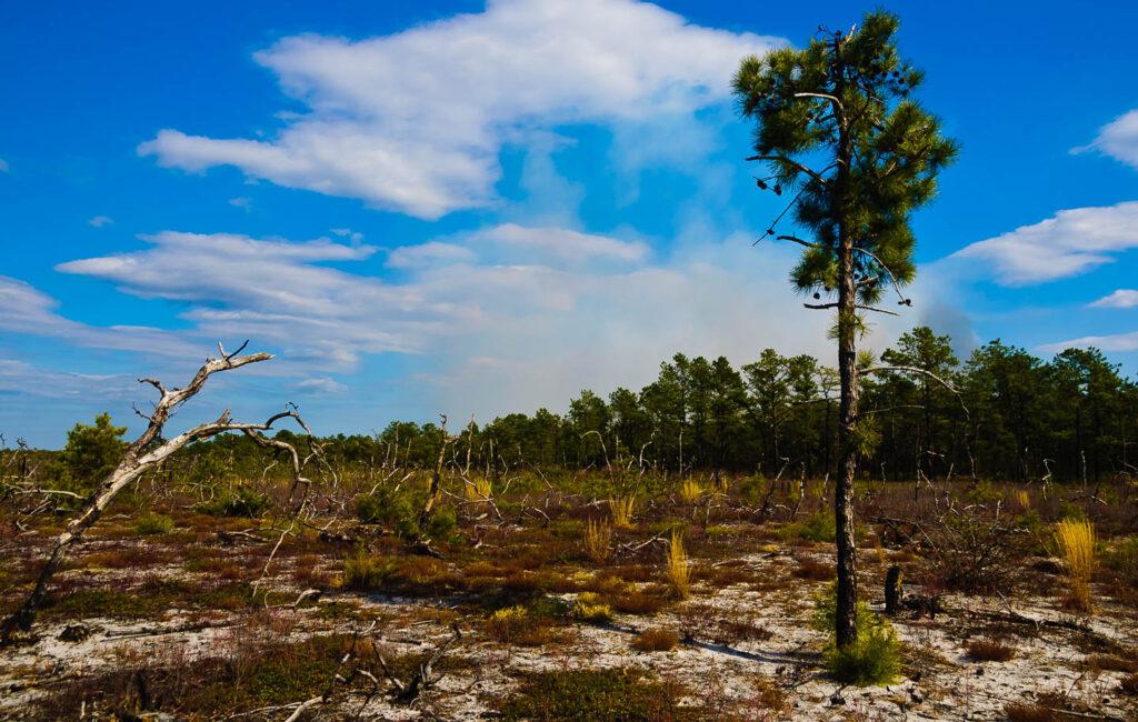 Pygmy Pines Plains Photographs