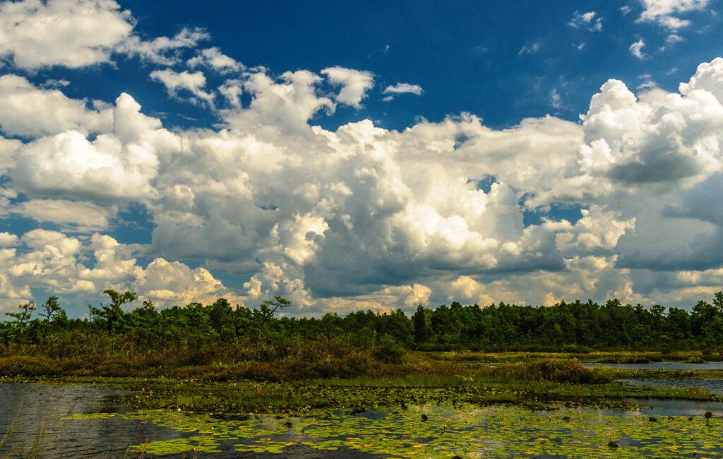 Whites Bog Landscape