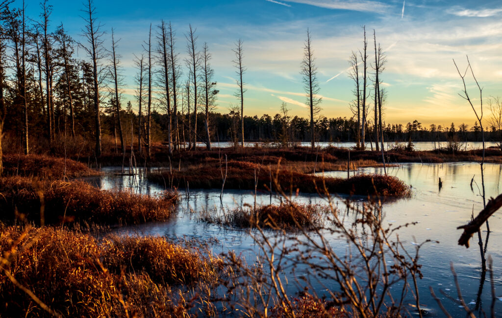 Silence is Golden in the Pine Barrens
