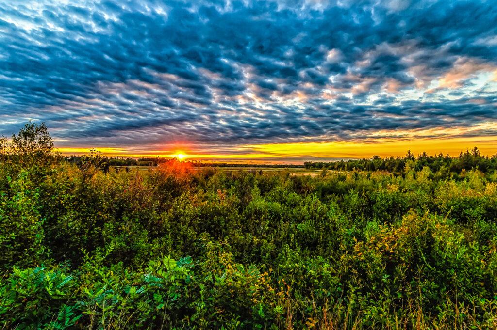 pine lands sunset photo