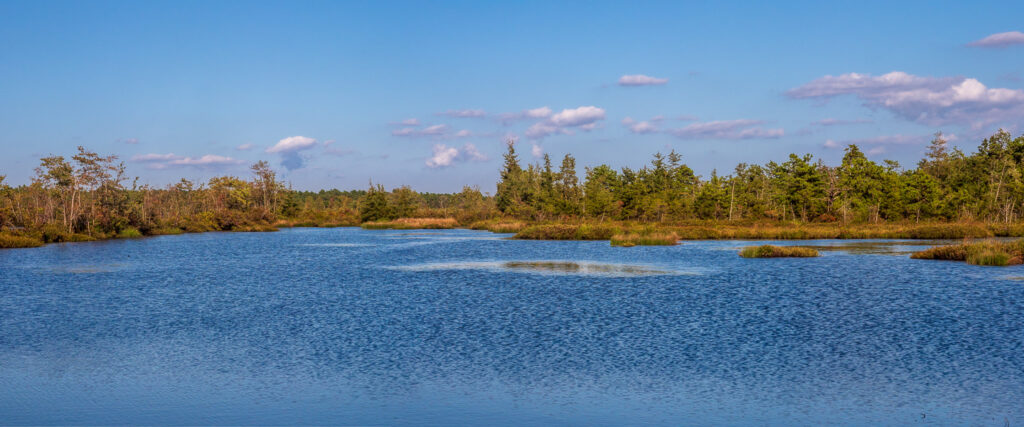 Pinelands Photo showing the beauty of New Jersey