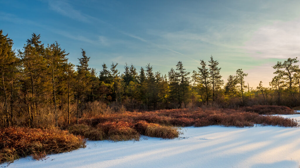 Whites Bog in Winter Snow landscape Photography