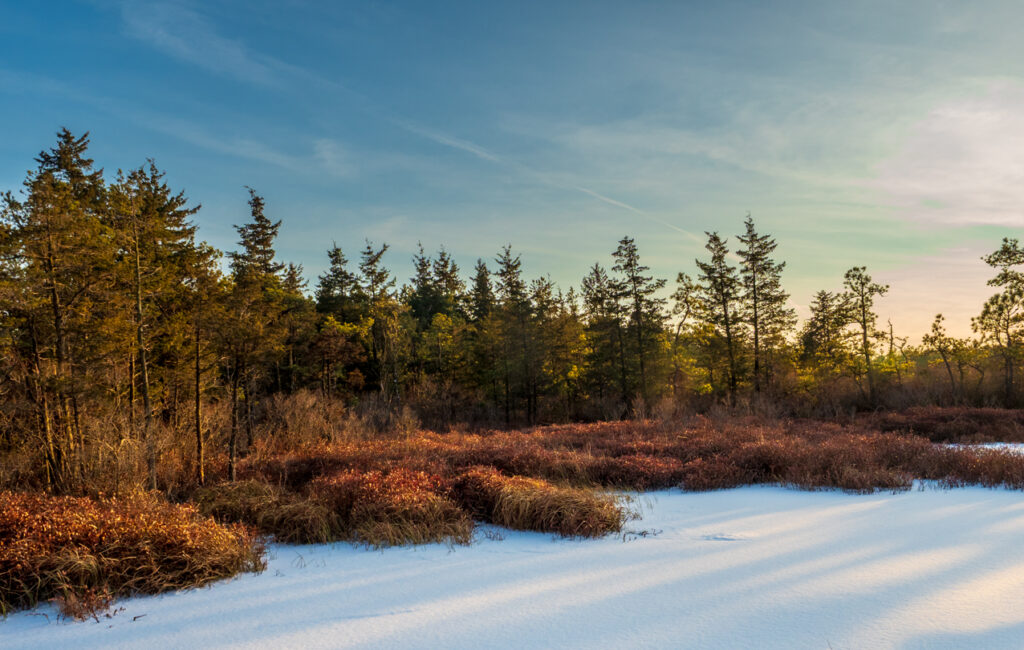 Winter at Whites Bog