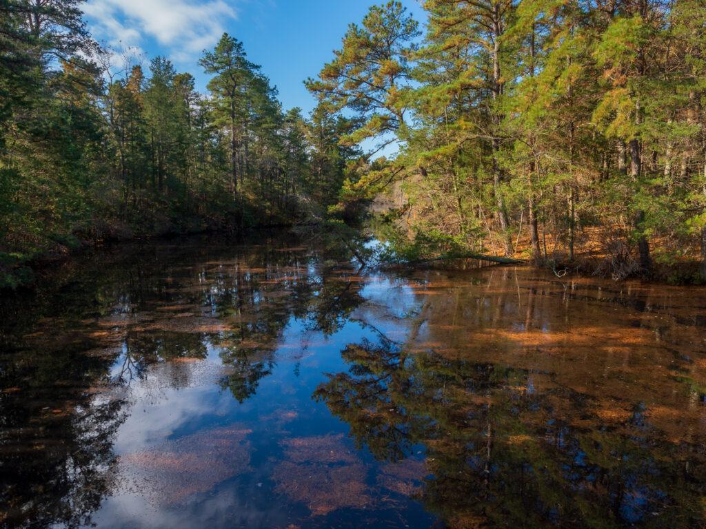 Cedar run wildlife center photo
