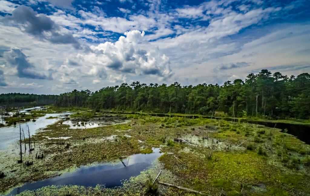 Beaver Pond NJ Pinelands