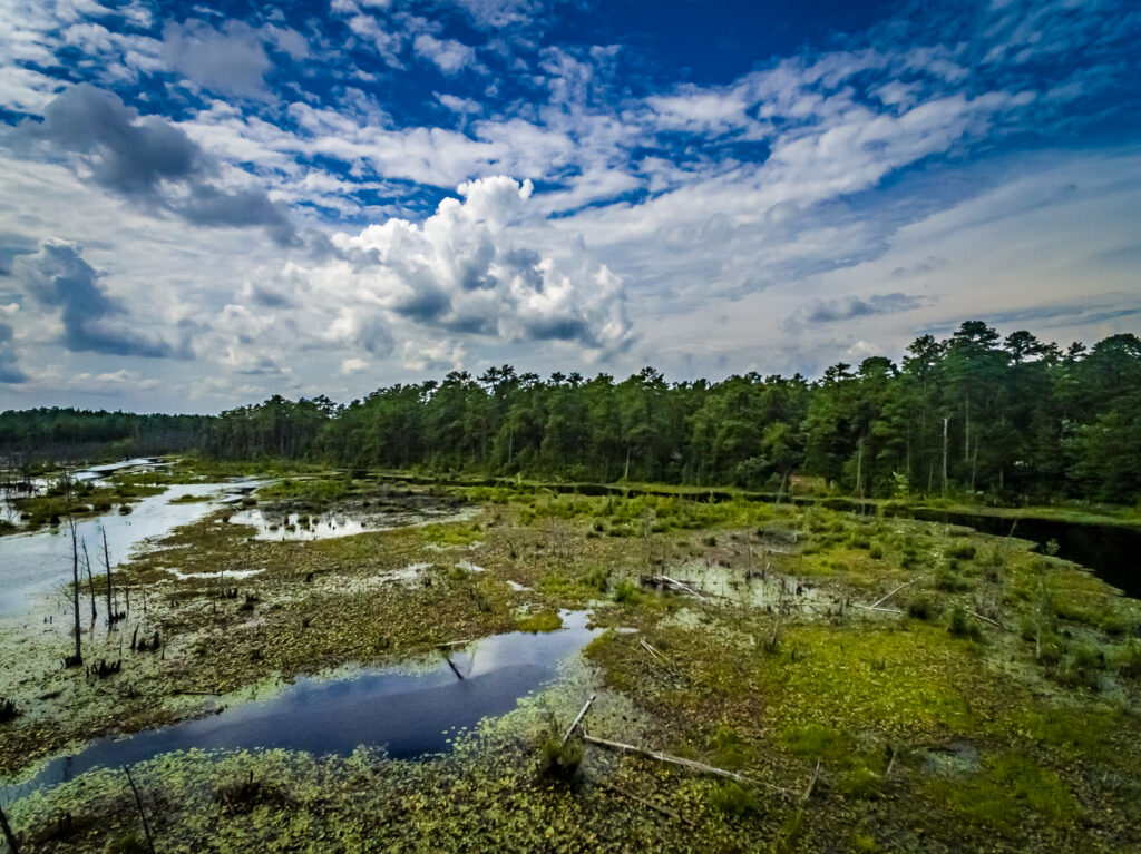 Pinelands-beaver-pond