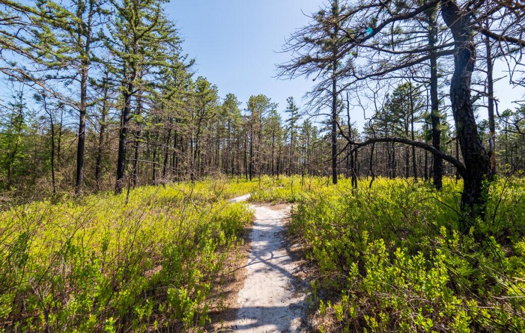 Red Trail Franklin Parker Preserve 5-21-2020
